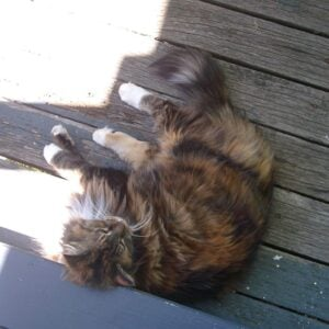 Cath's 18-year-old cat, happy in Tasmania